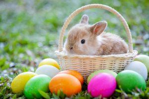 easter-bunny-origins-1581358909